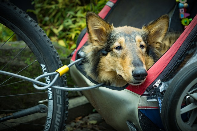big dog on a bicycle