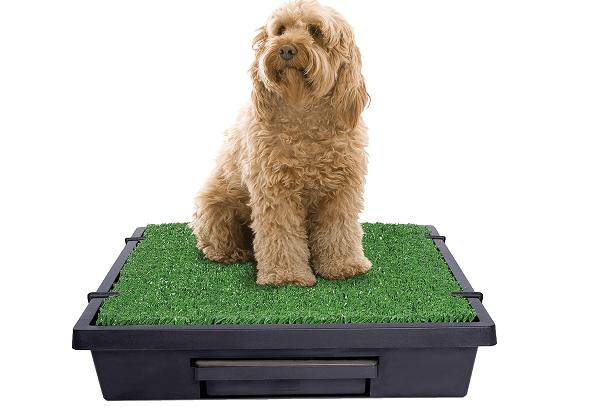 Petsafe dog potty