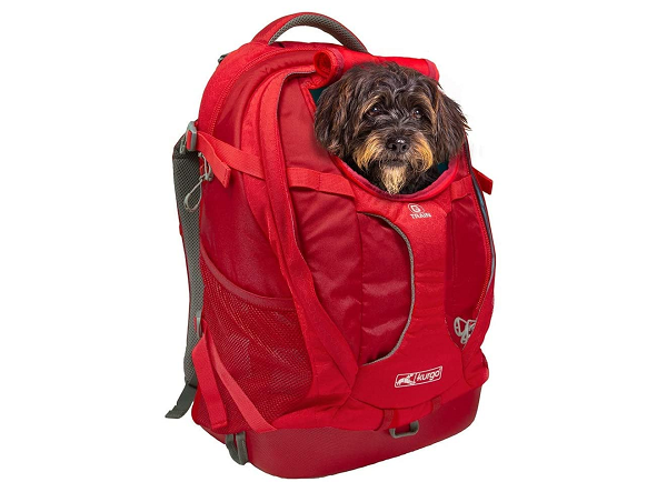 Travel backpack for small dog