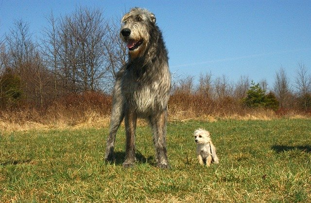 a big and a small dogs